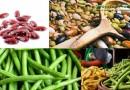 Полезные свойства и вред стручковой фасоли для организма