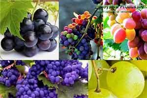 состав витаминов винограда