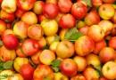 В чем заключается польза и какой возможный вред от яблок для здоровья ?