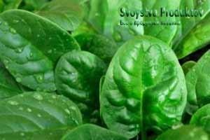 лечебные свойства шпината