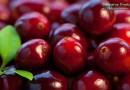 Полезные свойства клюквы и противопоказания к употреблению