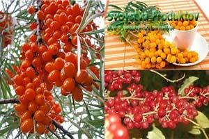 состав витаминов облепихи