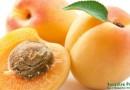 Польза и вред абрикосов для организма