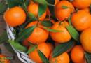 Польза и вред мандаринов для организма