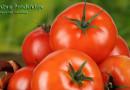 Помидоры: калорийность польза и вред для организма