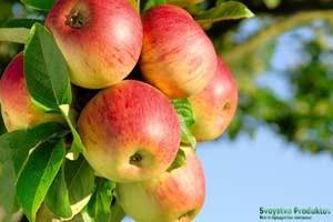 Польза яблочных семечек