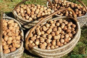 Калорийность и состав грецких орехов
