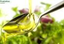 Полезные свойства конопляного масла, вред и противопоказания